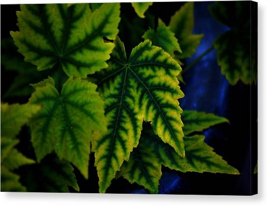 In The Green Canvas Print