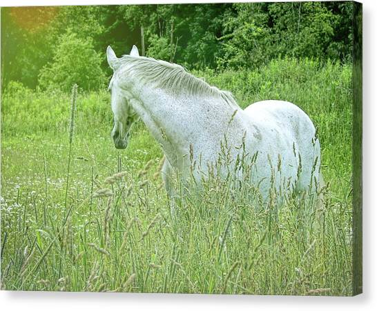 In The Meadow Canvas Print by JAMART Photography
