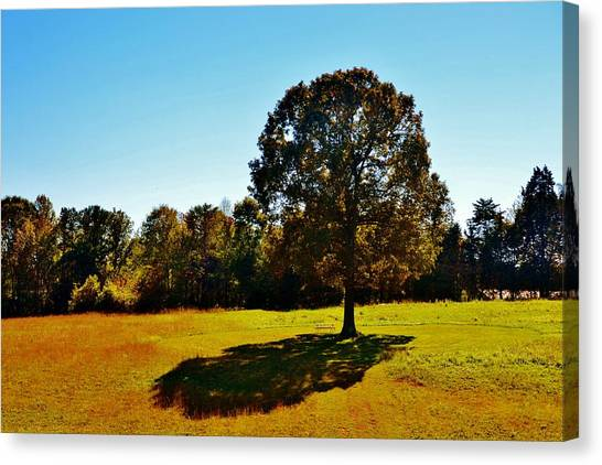 In The Shadow Of A Tree Canvas Print