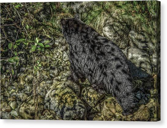 In The Shadows Black Bear Canvas Print