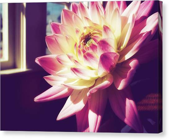 In The Sunshine Canvas Print by JAMART Photography