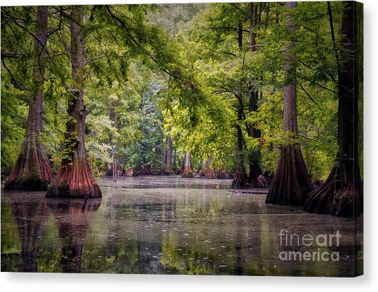 Reelfoot Lake State Park Canvas Prints | Fine Art America