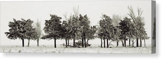 In The Tree Line Canvas Print