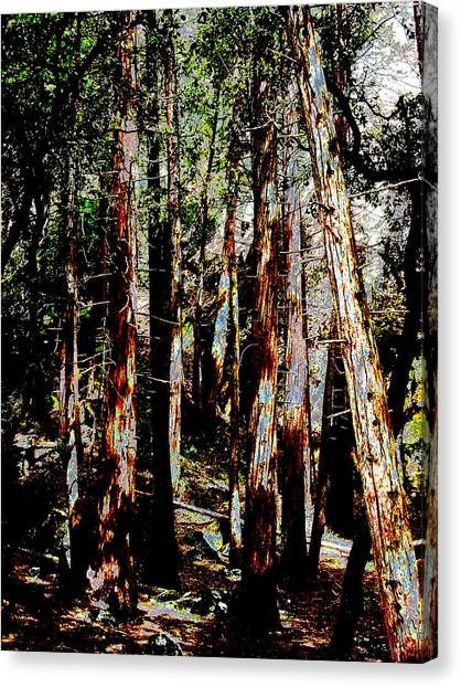In The Trees Canvas Print by Tim Tanis