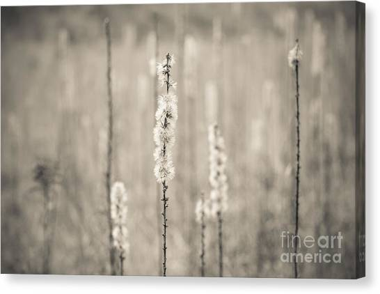In The Wild Grass Canvas Print