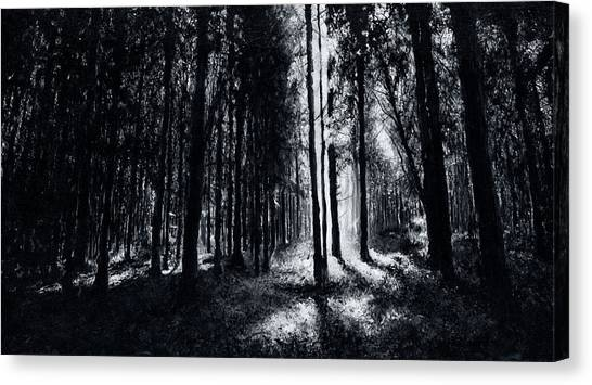 In The Woods 6 Canvas Print