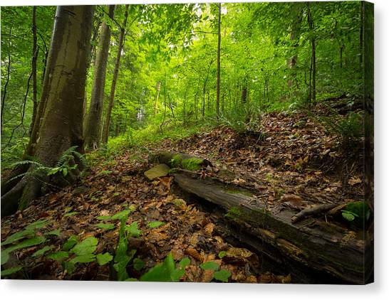 Fallen Tree Canvas Print - In The Woods_2 by Shane Holsclaw