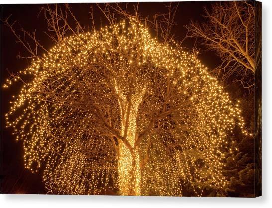Incandescent Branches  Canvas Print
