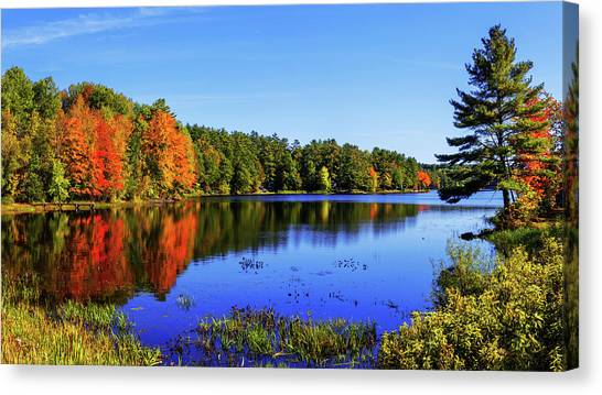 Pine Trees Canvas Print - Incredible by Chad Dutson