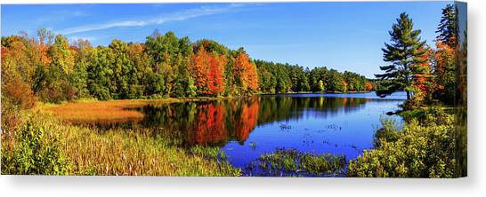Pine Trees Canvas Print - Incredible Pano by Chad Dutson
