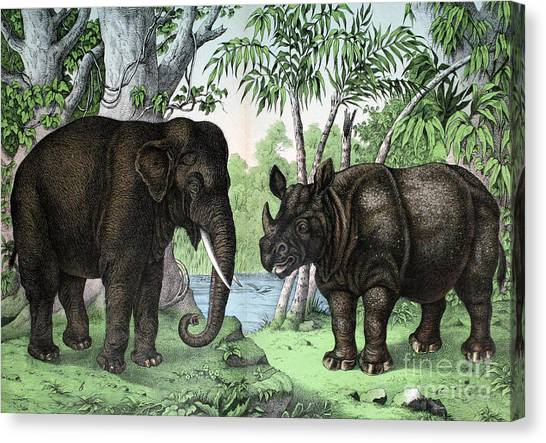 One Horned Rhino Canvas Print - Indian Elephant And Rhinoceros by Biodiversity Heritage Library