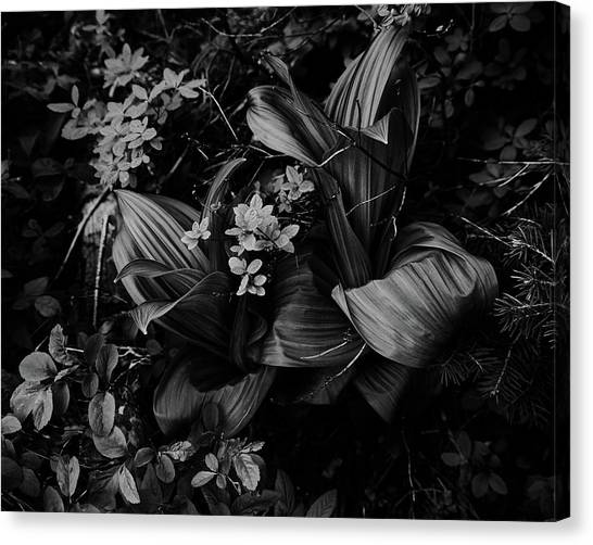 Canvas Print featuring the photograph Indian Hellebore 3 by Trever Miller