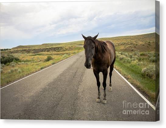 Canvas Print featuring the photograph Indian Horse by Sandy Adams