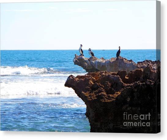 Indian Ocean Birds Resting On Rocks Canvas Print