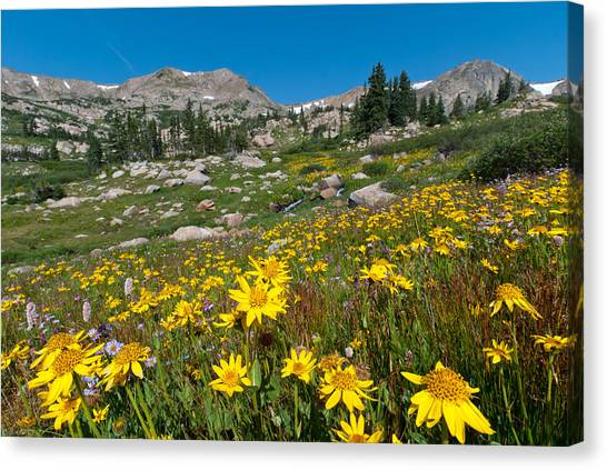 Indian Peaks Summer Wildflowers Canvas Print