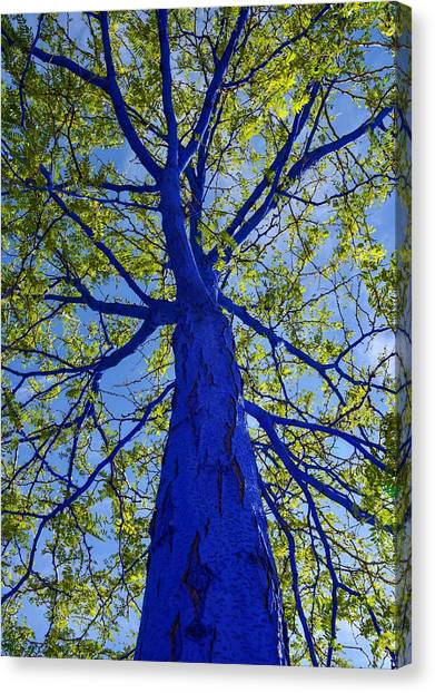 Indigo Tree Canvas Print
