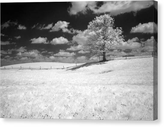 Infrared Tree Canvas Print