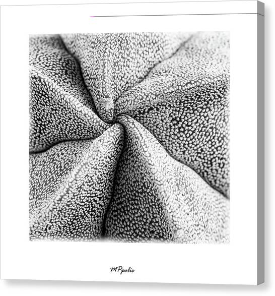 Inner Plant Details Canvas Print