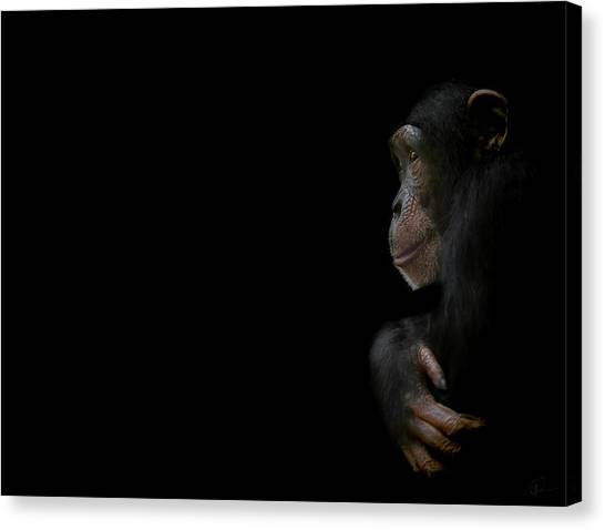 Chimpanzees Canvas Print - Innocence by Paul Neville
