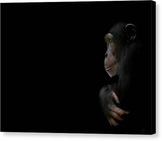 Primates Canvas Print - Innocence by Paul Neville