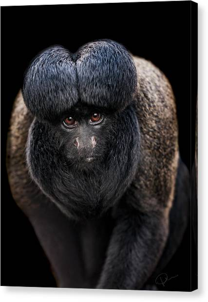 Monkeys Canvas Print - Inquisitive  by Paul Neville