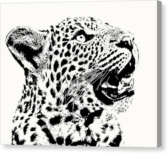 Inquisitive Young Leopard Looking Up Canvas Print
