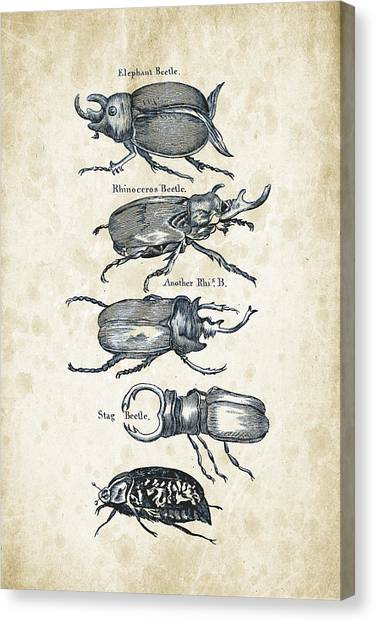 Insects Canvas Print - Insects - 1792 - 01 by Aged Pixel