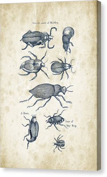 Insects Canvas Print - Insects - 1792 - 02 by Aged Pixel