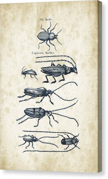 Insects Canvas Print - Insects - 1792 - 03 by Aged Pixel