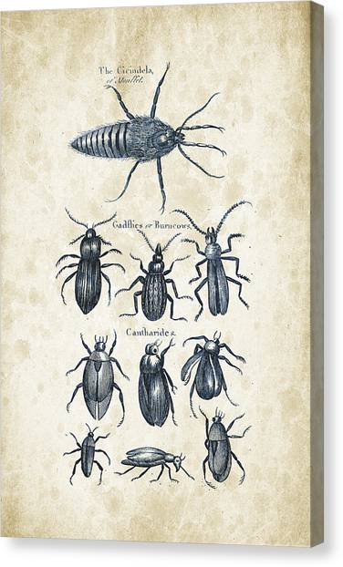 Insects Canvas Print - Insects - 1792 - 04 by Aged Pixel