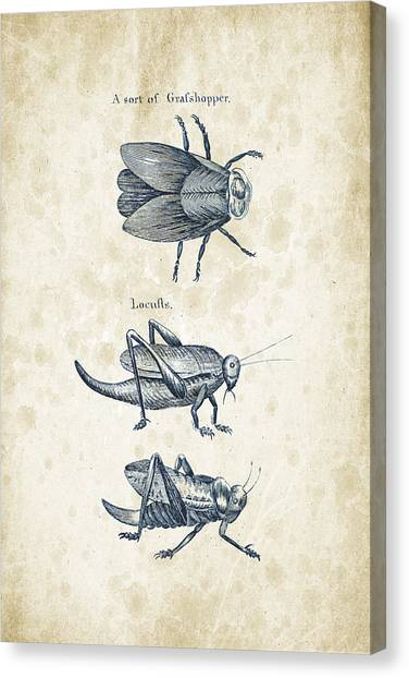 Insects Canvas Print - Insects - 1792 - 08 by Aged Pixel