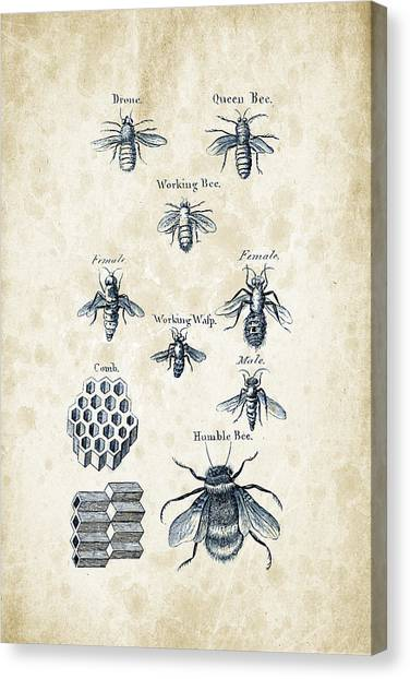 Bugs Canvas Print - Insects - 1792 - 14 by Aged Pixel