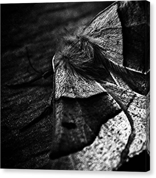 Insects Canvas Print - #insects #insect #bug #bugs by Jason Michael Roust