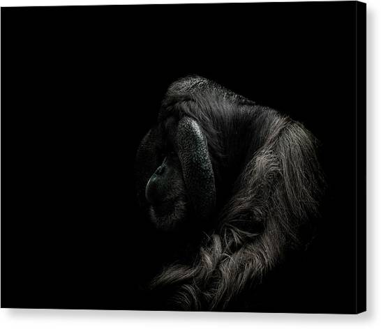 Orangutan Canvas Print - Insecurity by Paul Neville