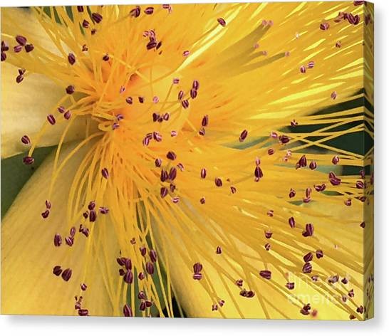Inside A Flower - Favorite Of The Bees Canvas Print
