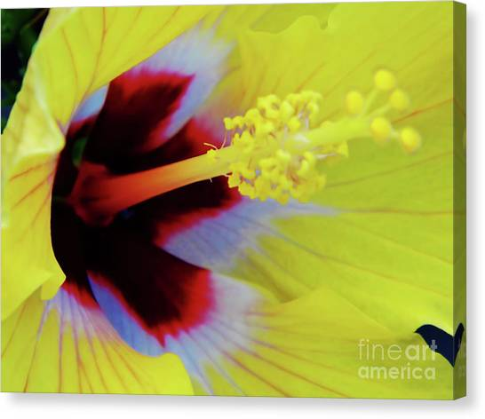 Inside A Yellow Beauty Canvas Print