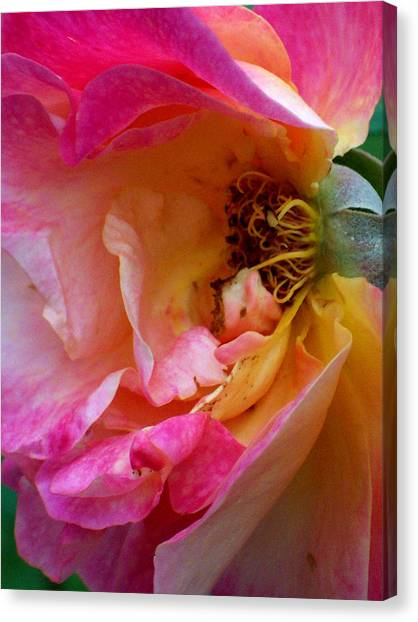 Inside Out Canvas Print by Robin Jacobs