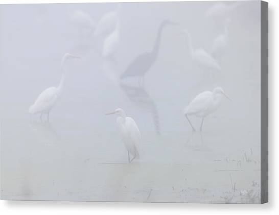 Egrets Canvas Print - Inside The Fog by Everet Regal