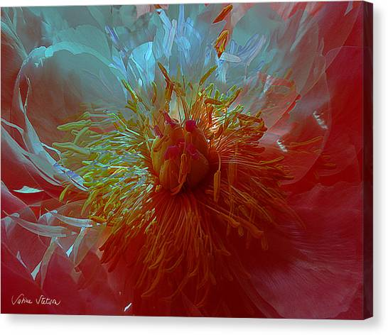 Canvas Print - Inside The Heart Of A Peonie by Sabine Stetson