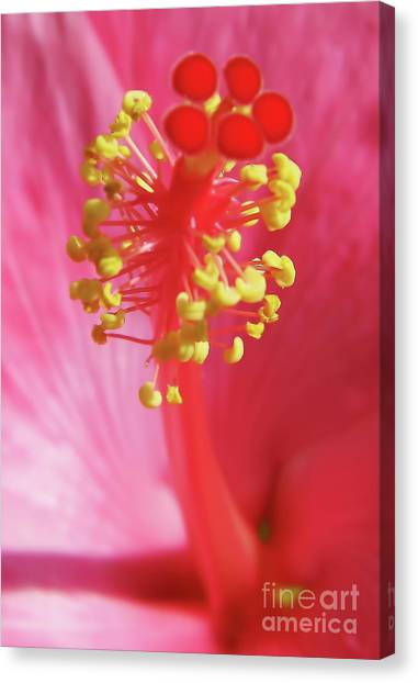 Inside The Hibiscus Canvas Print