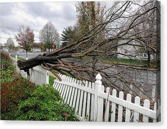 Fallen Tree Canvas Print - Insurance Claim by Olivier Le Queinec