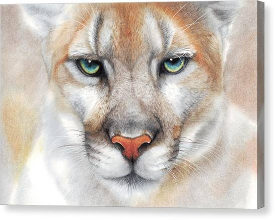 Intensity - Mountain Lion - Puma Canvas Print