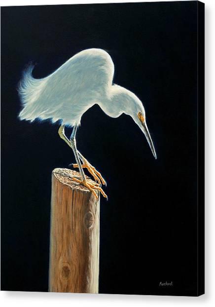 Interlude - Snowy Egret Canvas Print
