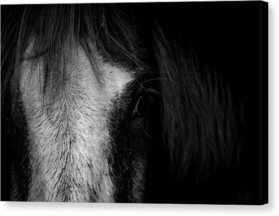 Equine Canvas Print - Intimate  by Paul Neville