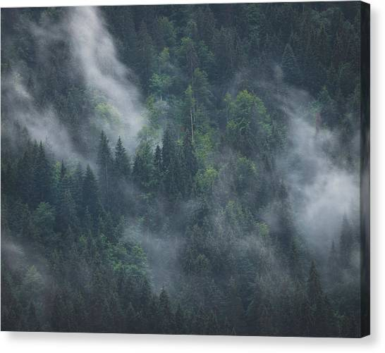 Into Deep Forest Canvas Print