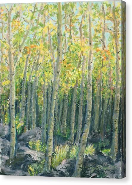 Into The Aspens Canvas Print