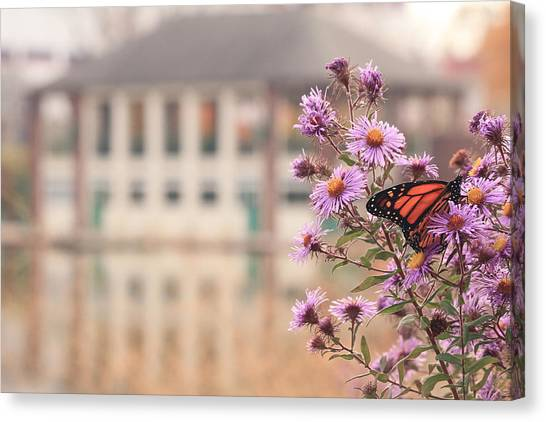Canvas Print featuring the photograph Into The Asters by Viviana  Nadowski