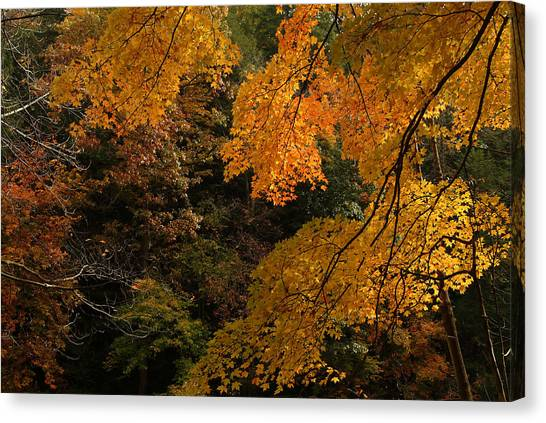 Into The Fall Canvas Print