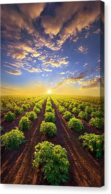 Cabbage Canvas Print - Into The Future by Phil Koch