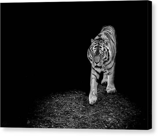 Tigers Canvas Print - Into The Light by Paul Neville